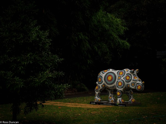 The wild rhino exhibition comes to Sydney