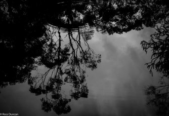 Reflections in a billabong.