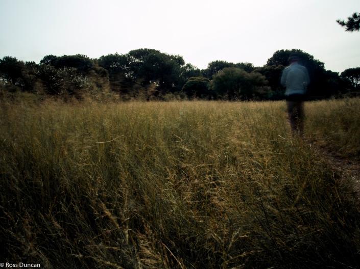 Parklands walks