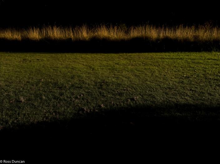 Autumn shadows.