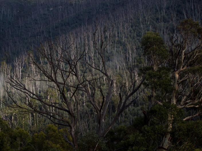 Lower Alpine forest views